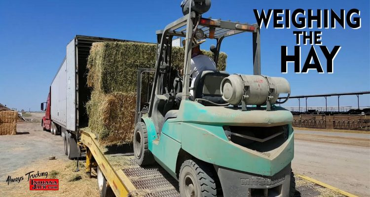 Weighing-the-Hay