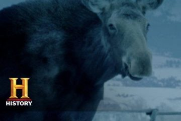 Ice-Road-Truckers-Lisa-and-the-Moose-History